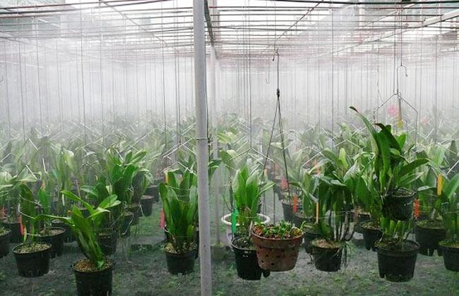 Hiện đầu tưới phun sương xòe được sử dụng nhiều ở khu vườn ươm, vườn lan..