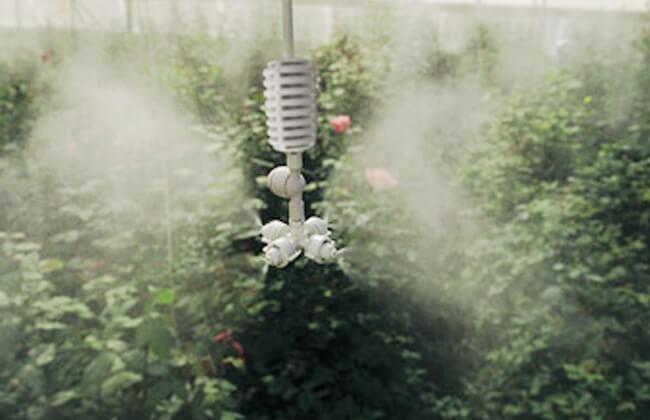 Đầu tưới phun sương xòe