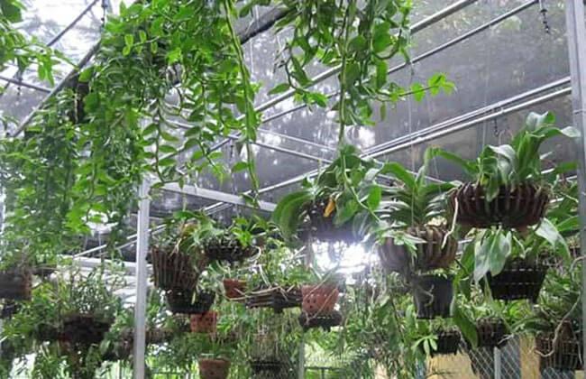 Ứng dụng hệ thống tưới phun sương cho lan
