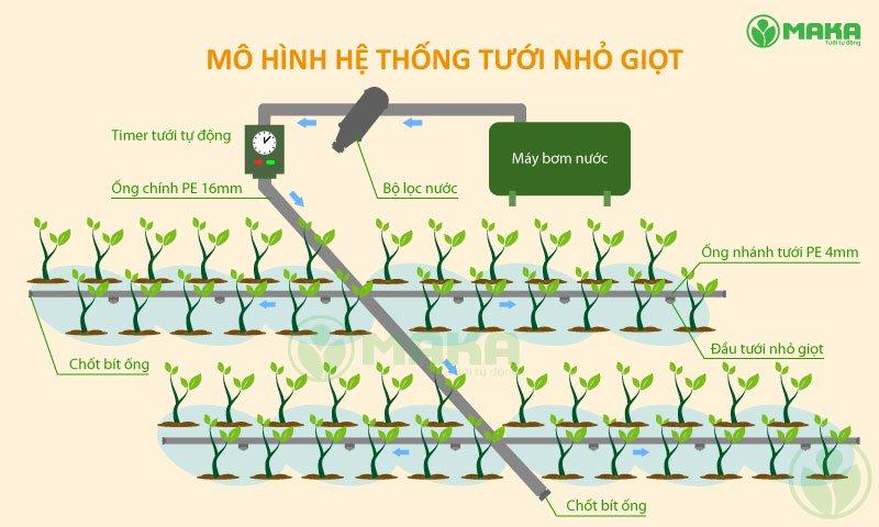 mo-hinh-he-thong-tuoi-nho-giot-nh-
