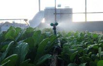 Hệ thống tưới rau tự động cho sân thượng
